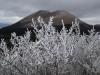 樹氷と阿蘇杵島岳