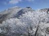 樹氷ごしに星生山を望む