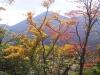 矢岳の紅葉