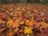 白髪岳の紅葉