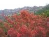 鋸山の紅葉